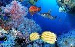 Formosoft Aqua Real 2 - zobacz piękno oceanu